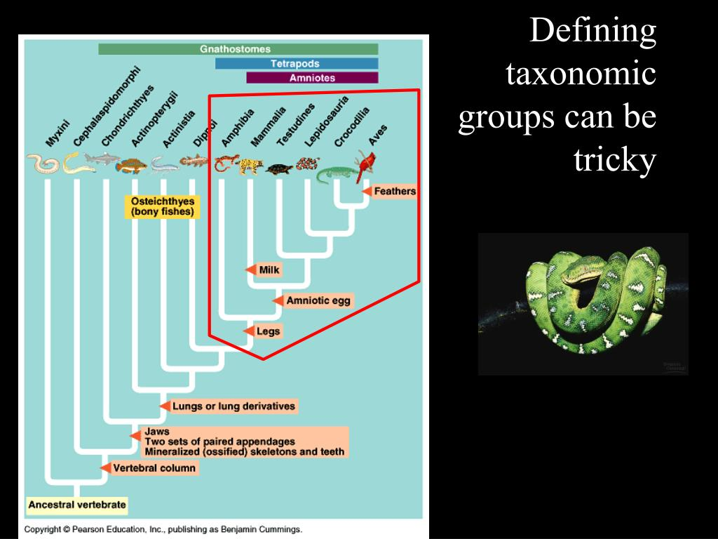 Defining taxonomic groups can be tricky