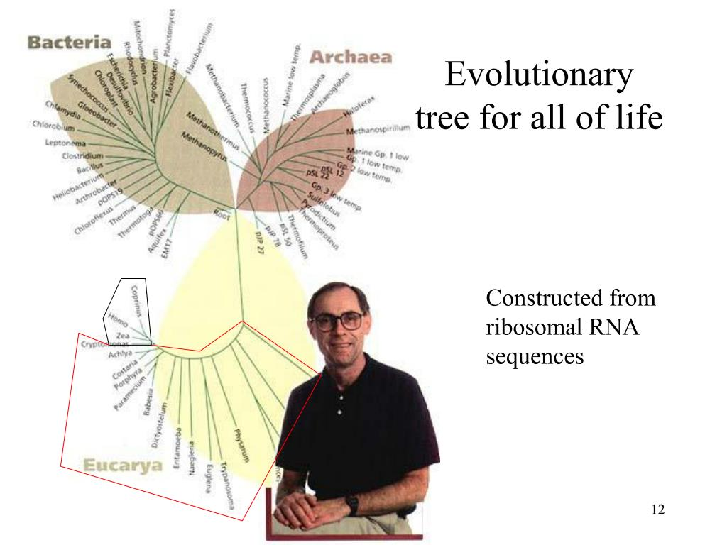 Evolutionary tree for all of life