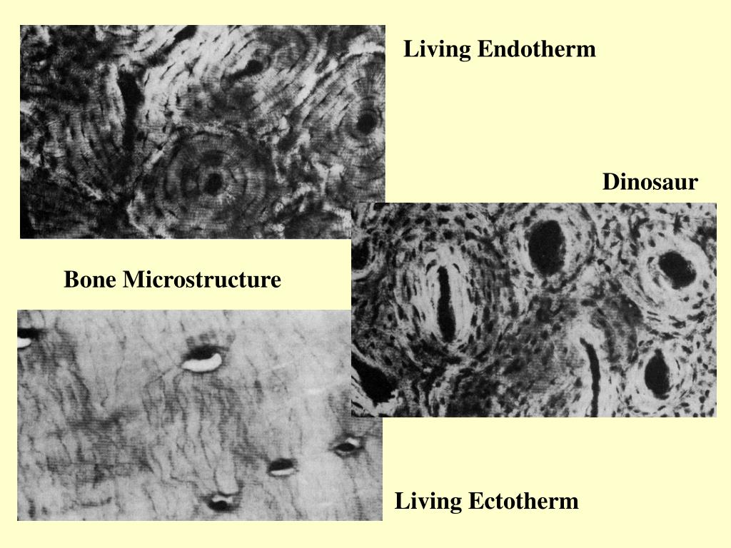 Living Endotherm