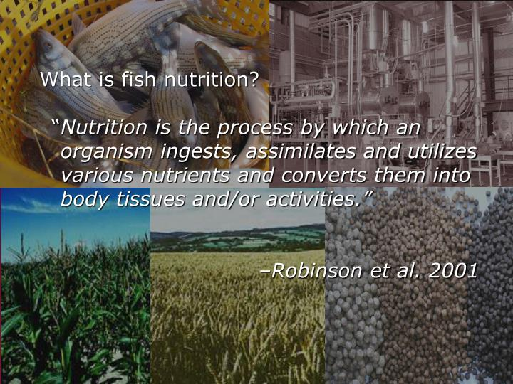 What is fish nutrition?