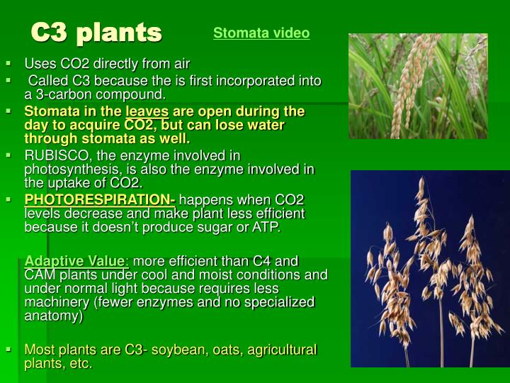 PPT - Photosynthesis: Using Light to make Food PowerPoint ...