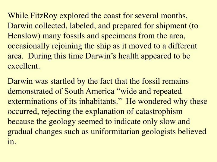 While FitzRoy explored the coast for several months, Darwin collected, labeled, and prepared for shipment (to Henslow) many fossils and specimens from the area, occasionally rejoining the ship as it moved to a different area.  During this time Darwin's health appeared to be excellent.