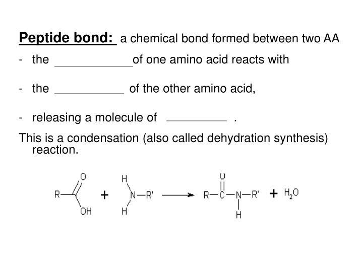 Peptide bond: