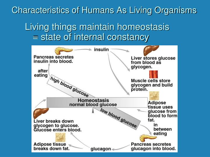 characteristics of living organisms What is life the 5 characteristics of living things the five characteristics of living things (organisms) all organisms must respond and adopt to changes in their environment.