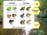 minnesota frogs