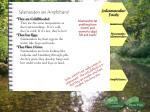 salamander facts