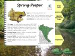 spring peeper