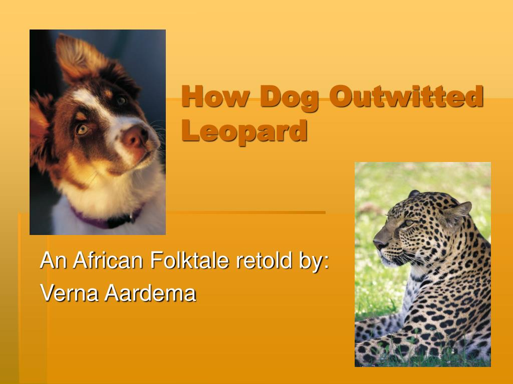 how dog outwitted leopard l.