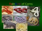 r a i n b o w of corns