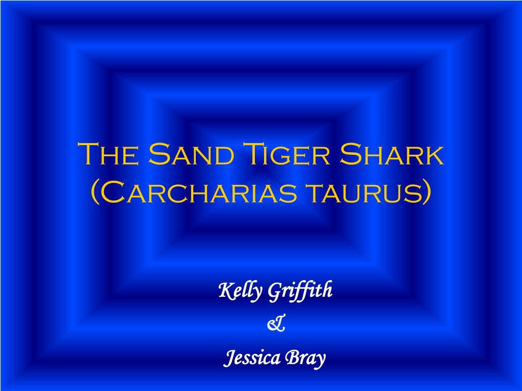 the sand tiger shark carcharias taurus l.