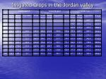 irrigated crops in the jordan valley