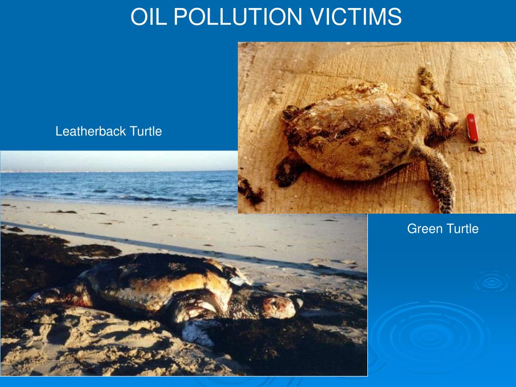 OIL POLLUTION VICTIMS