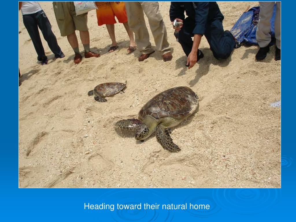 Heading toward their natural home