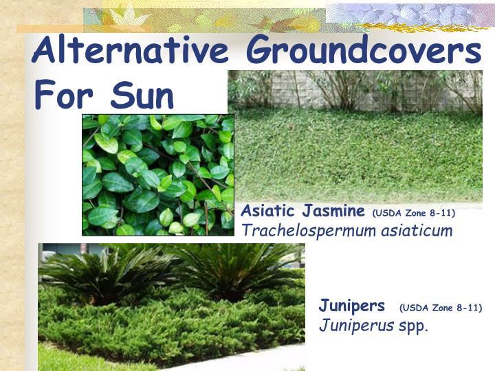 Alternative Groundcovers