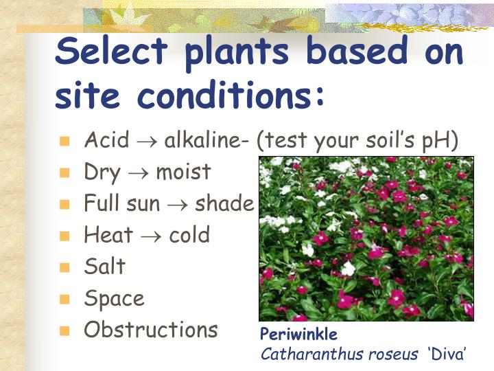 Select plants based on site conditions: