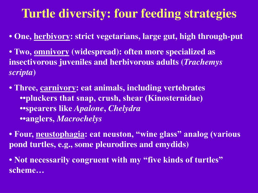 Turtle diversity: four feeding strategies