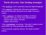 turtle diversity four feeding strategies