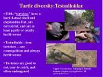 turtle diversity testudinidae