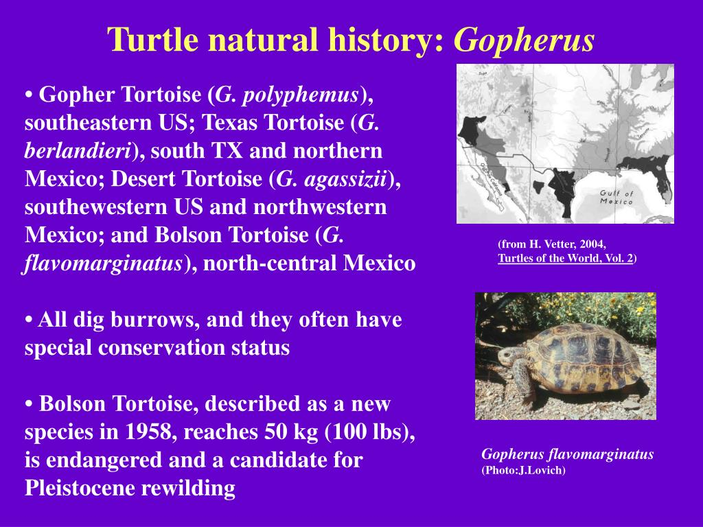 Turtle natural history: