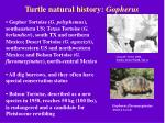 turtle natural history gopherus