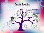 turtle species15
