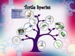 turtle species16