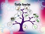 turtle species18