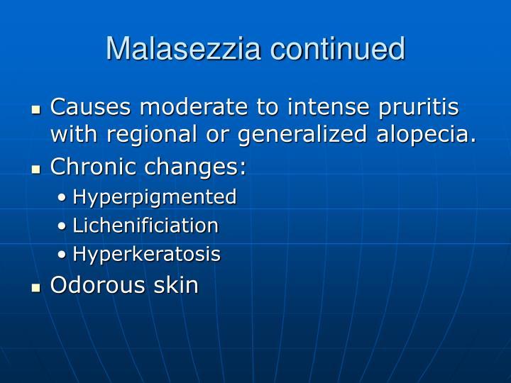 Malasezzia continued