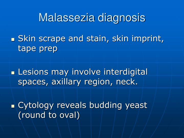Malassezia diagnosis