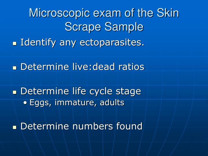 Microscopic exam of the Skin Scrape Sample