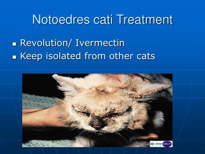 Notoedres cati Treatment