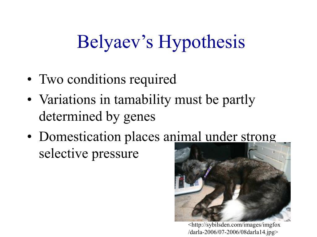 Belyaev's Hypothesis
