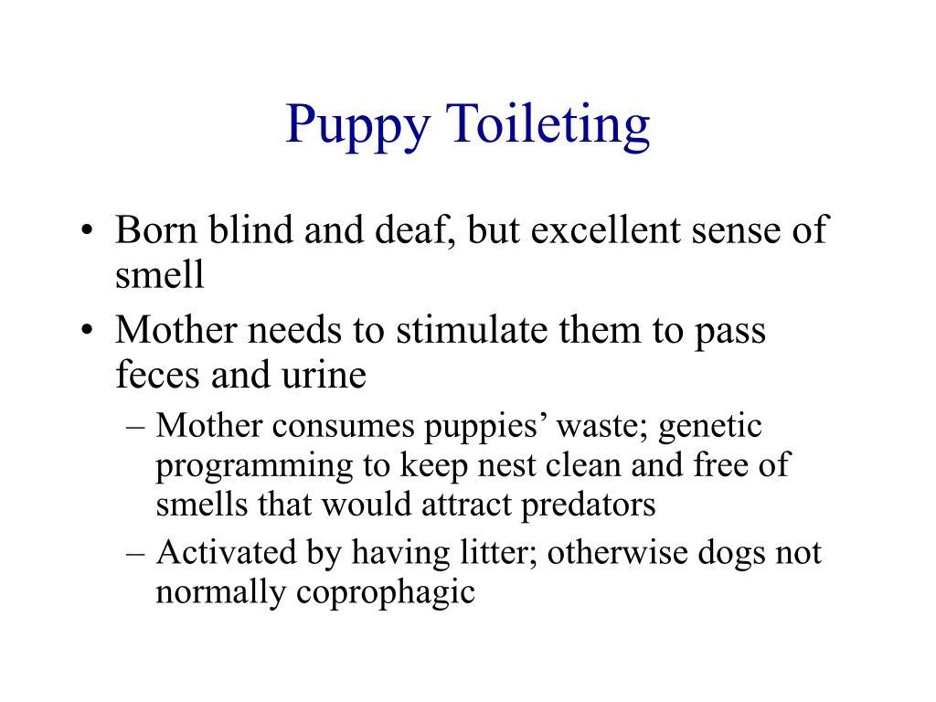 Puppy Toileting