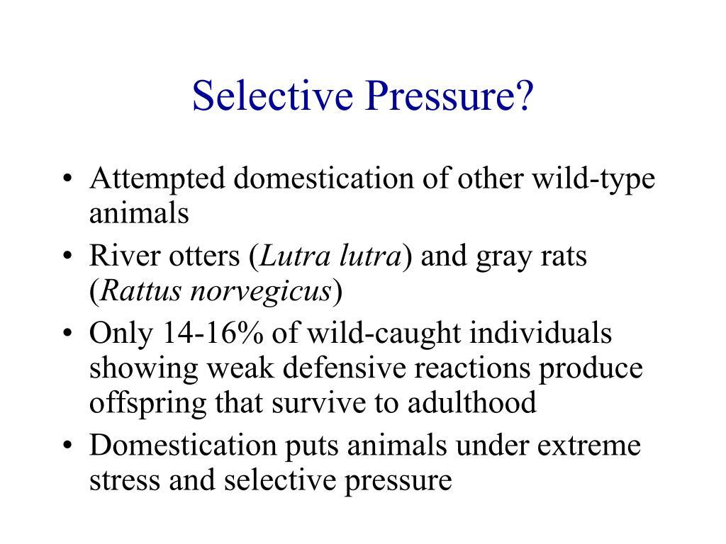 Selective Pressure?