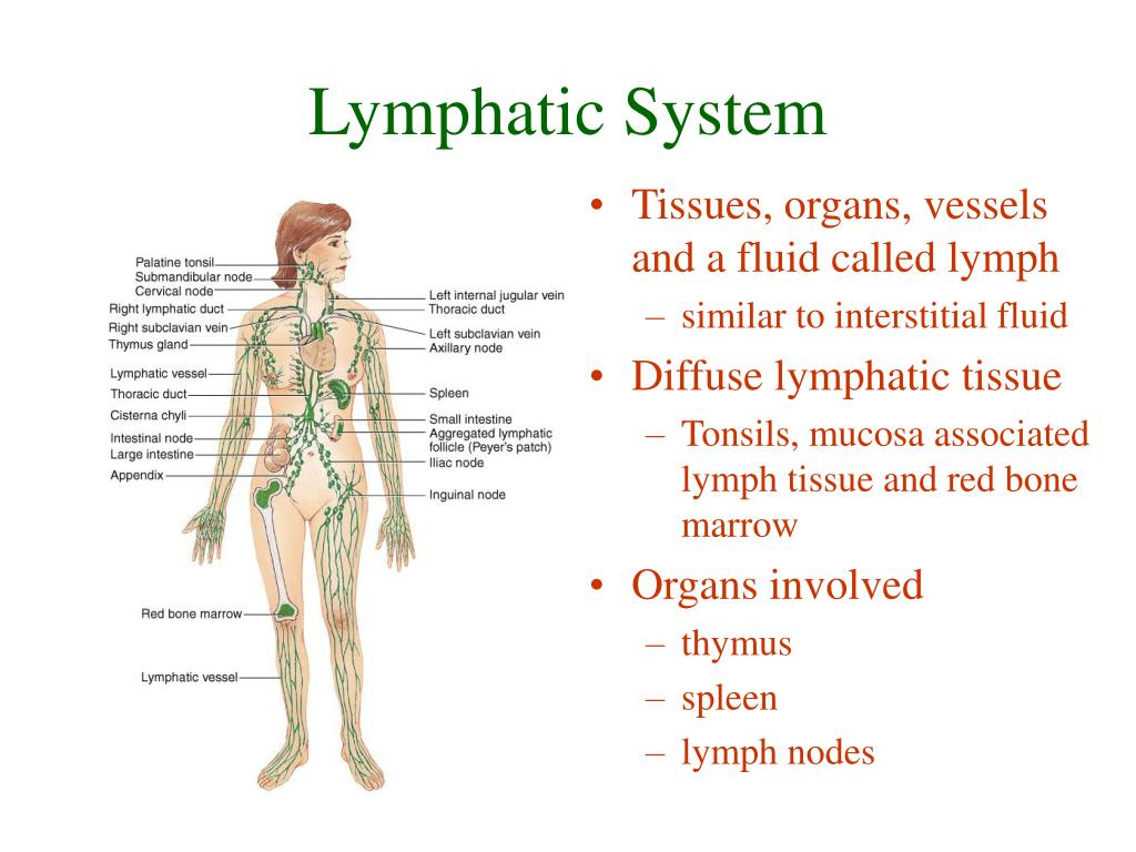 Ppt Lymphatic System Powerpoint Presentation Id977190