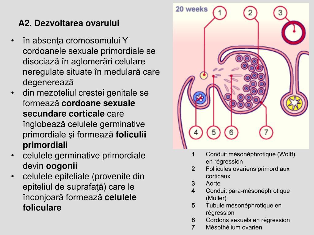 """Medic urolog: """"Cancerul de prostată localizat poate fi tratat și vindecat"""""""