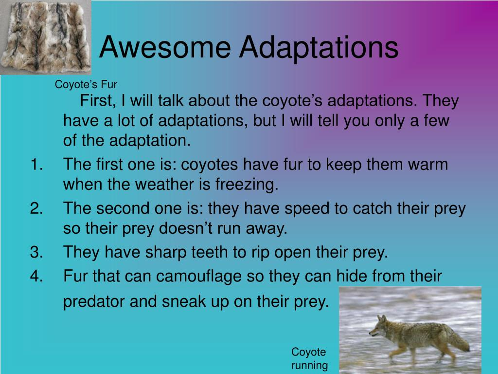 Awesome Adaptations