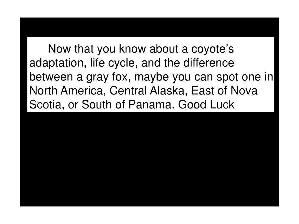 Now that you know about a coyote's adaptation, life cycle, and the difference between a gray fox, maybe you can spot one in North America, Central Alaska, East of Nova Scotia, or South of Panama. Good Luck