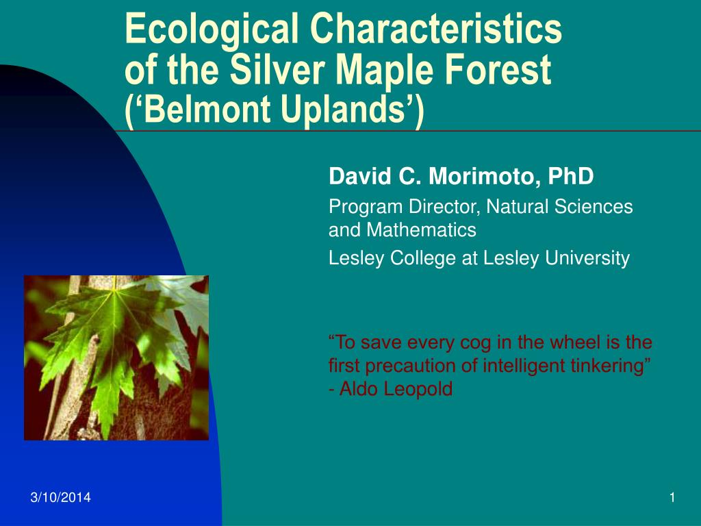 ecological characteristics of the silver maple forest belmont uplands