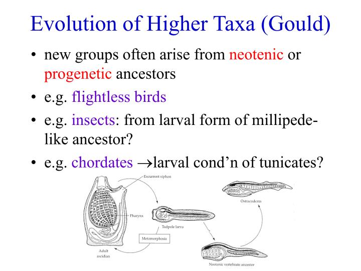 Evolution of Higher Taxa (Gould)