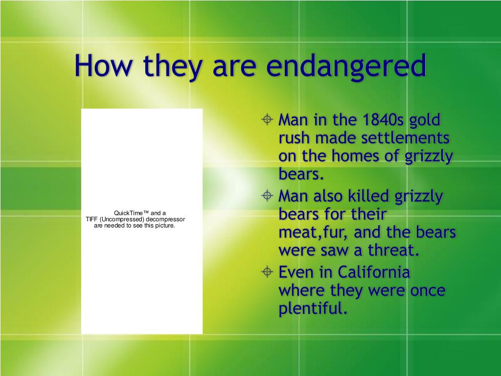 How they are endangered