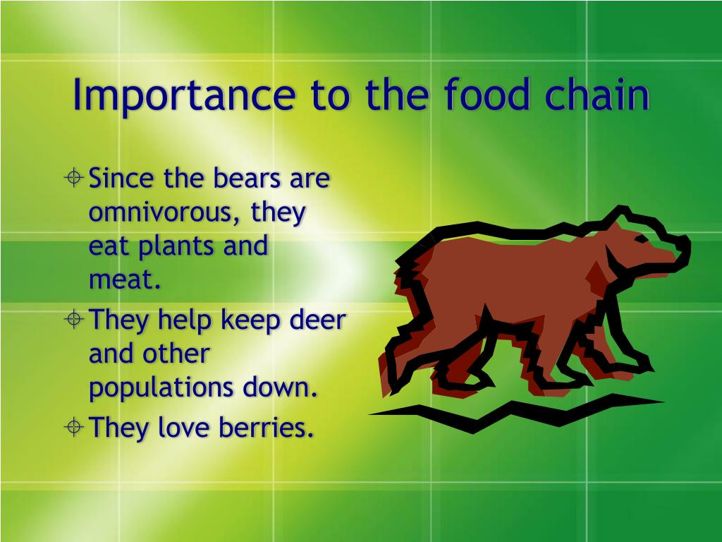 Importance to the food chain
