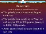 basic facts grizzley bear facts the bear neccessities
