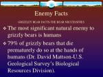 enemy facts grizzley bear facts the bear neccessities