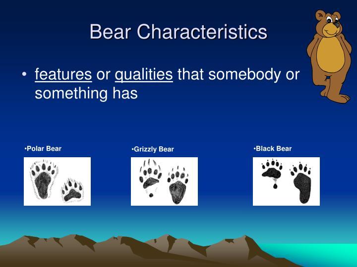 Bear characteristics