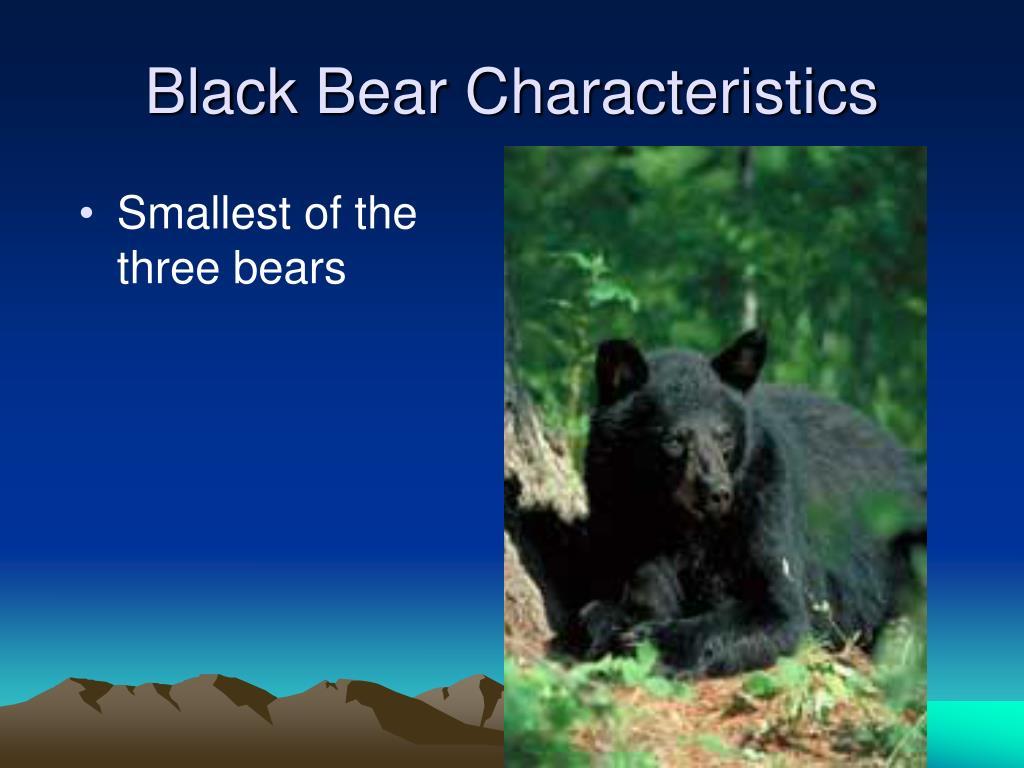Black Bear Characteristics