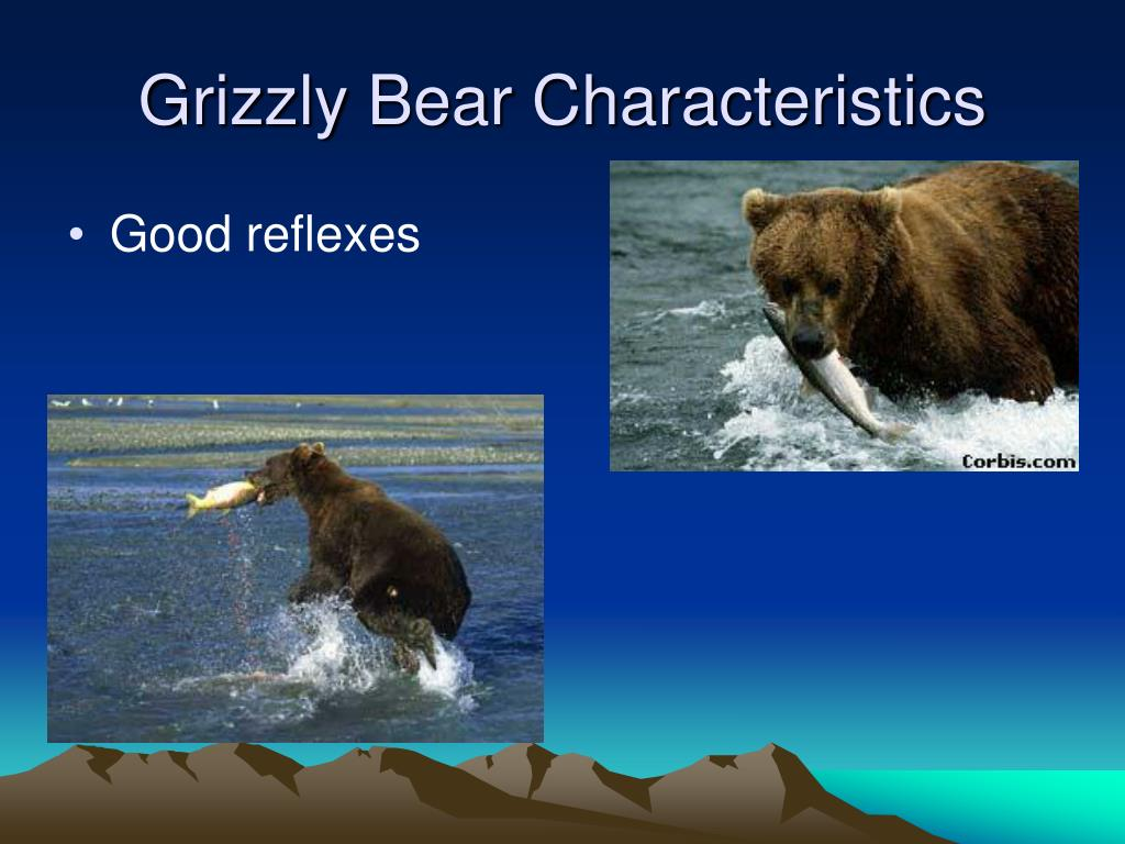 Grizzly Bear Characteristics