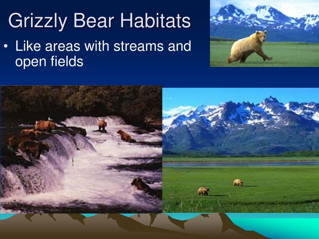 Grizzly Bear Habitats