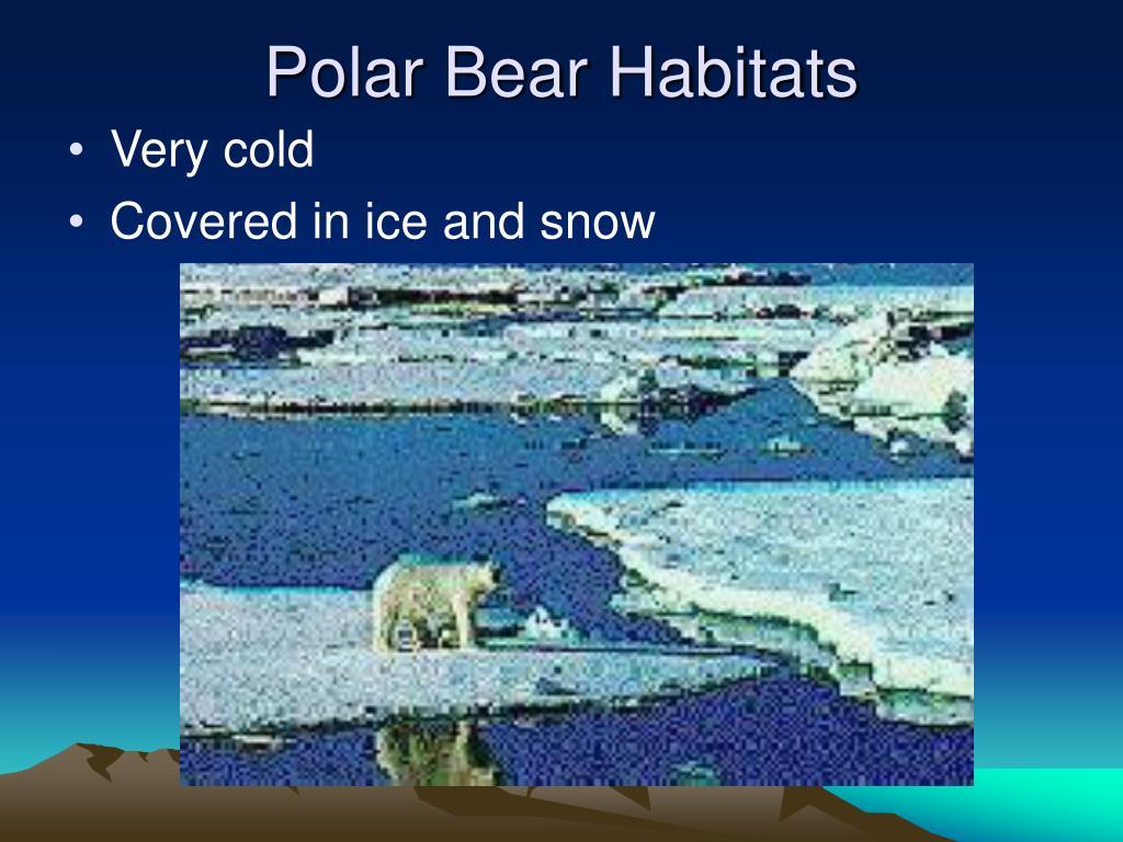 Polar Bear Habitats