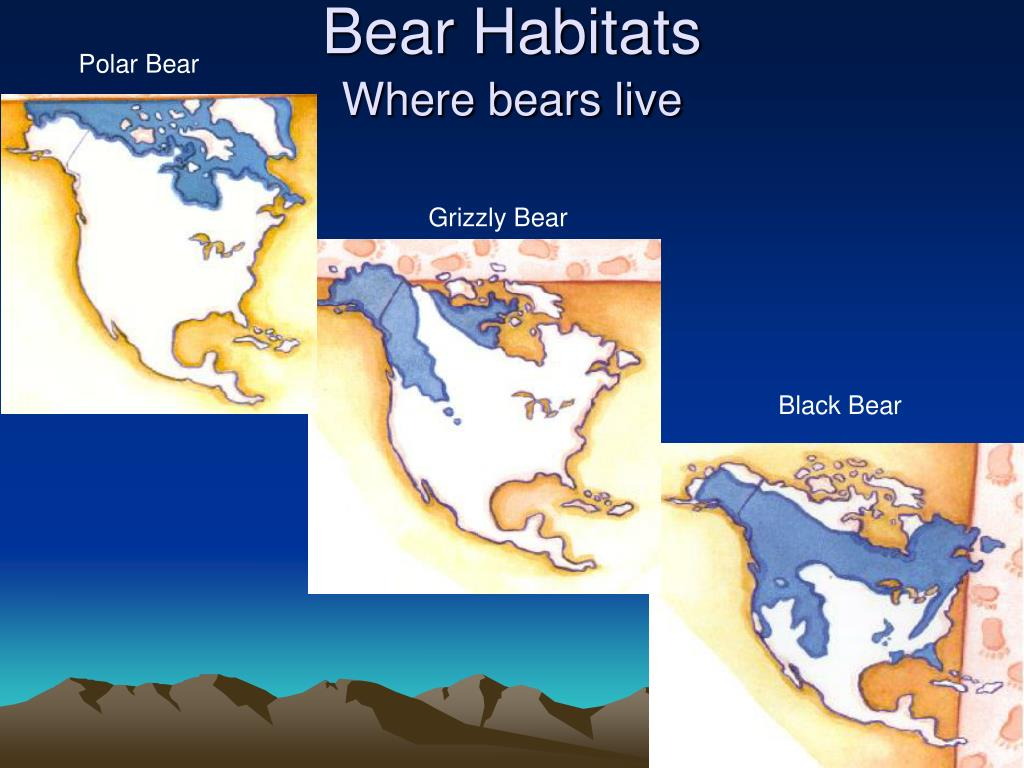 Bear Habitats